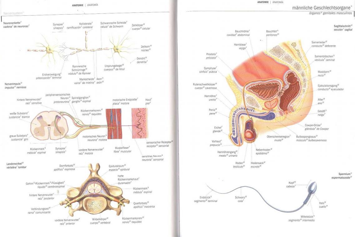 Ungewöhnlich Augenlid Anatomie Diagramm Ideen - Menschliche Anatomie ...