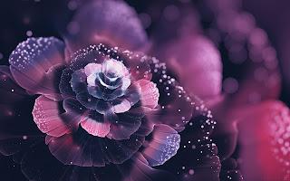 Abstract Rose HD Wallpaper