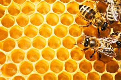 propolis, lekovita svojstva propolisa, sta je propolis, kako se koristi propolis, med, pcela, propolis slika, pcela slika,