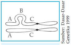 http://2.bp.blogspot.com/-b0qS5f9ecT4/UHJvndGYiLI/AAAAAAAABPE/jh3Q9o7Jyko/s1600/Formasi+gelang+pada+saat+sinapsis.png