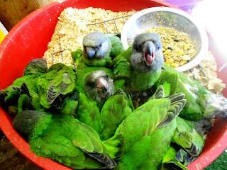 Parrot Salad