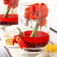Centerpiece with amaryllis and cranberries