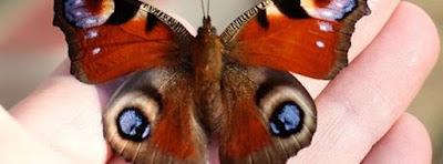 Couverture facebook les papillons