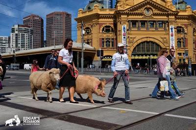 edgars-mission-pig-world-animal-day