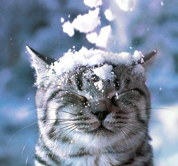 gatto in inverno