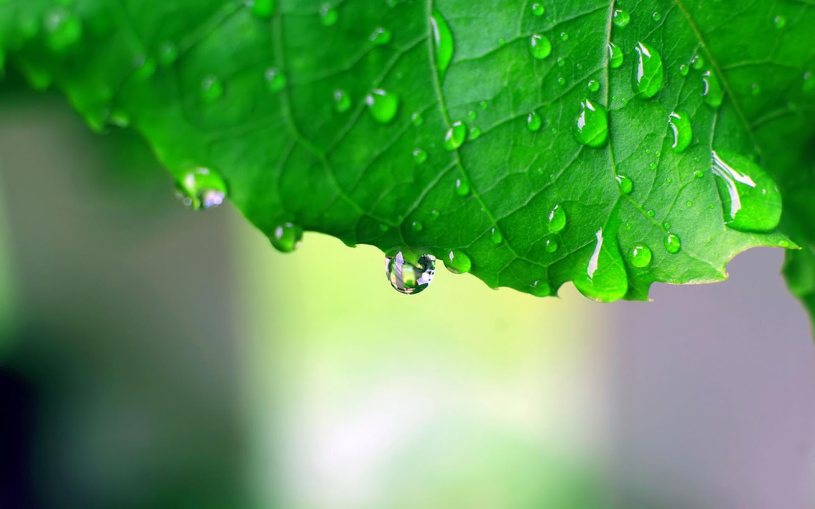 Must see   Wallpaper Home Screen Rain - Dew-Rain-HD-Wallpaper  Picture_761183.jpg