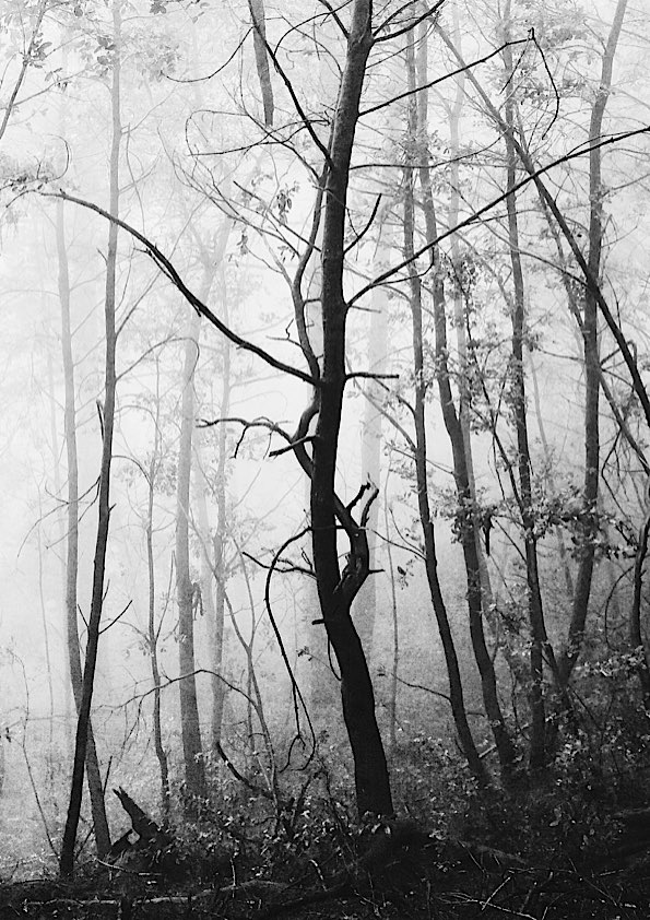 Foggy Forest  © David Pasillas