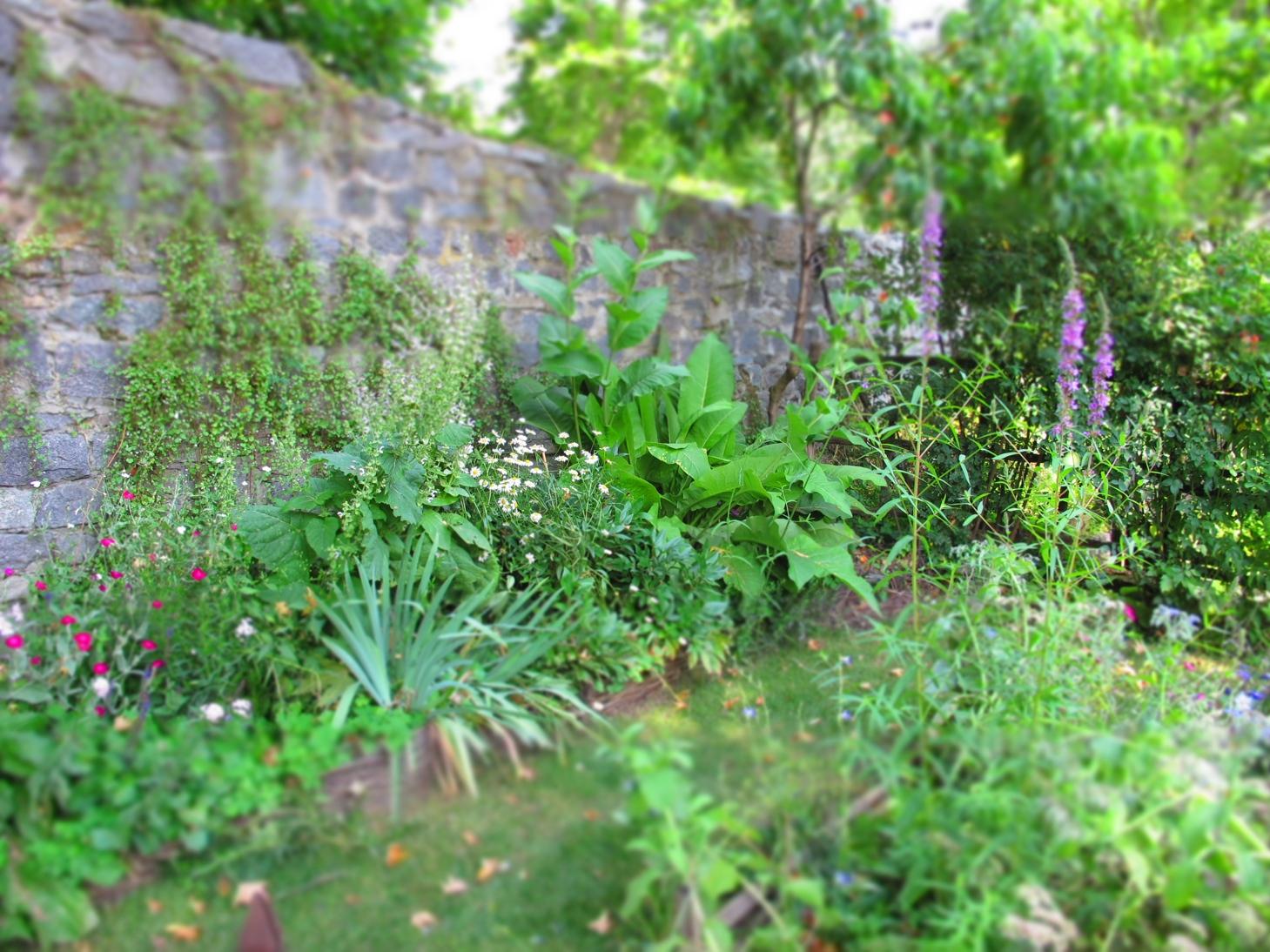 Il giardino visitato giardino del borgo medievale di - Alberi frutto giardino ...