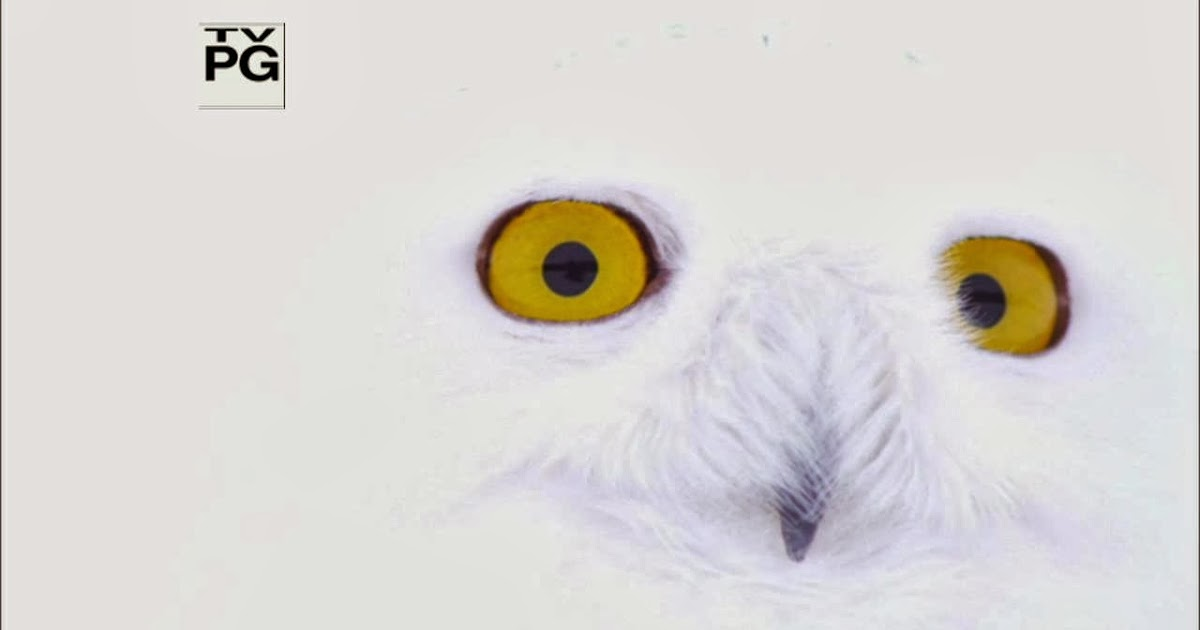 Misce Thoughts: Nature - Magic of the Snowy Owl (2012)