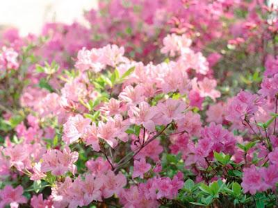 Đánh bay nỗi lo bị dị ứng phấn hoa