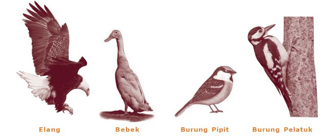 Macam-macam dan Contoh Adaptasi Morfologi pada Hewan