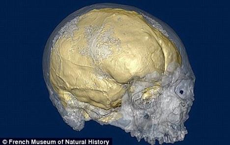 Otak Manusia Semakin Lama Mengalami Penyusutan (Menjadi Bodoh) - raxterbloom.blogspot.com