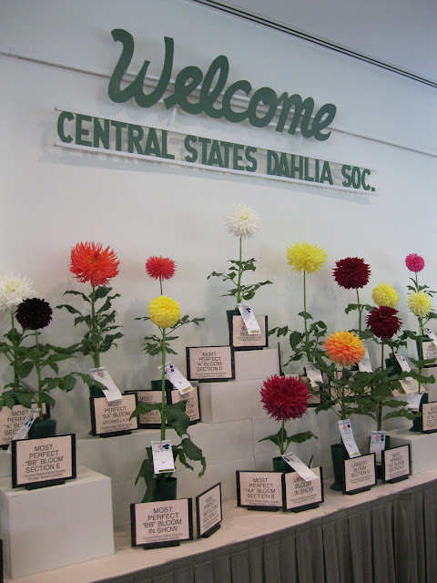 Best of Show Central States Dahlia Society