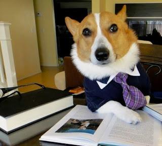 Lawyer Dog Meme Generator