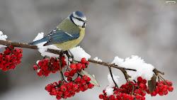 Azi,ninge pentru tine!!!