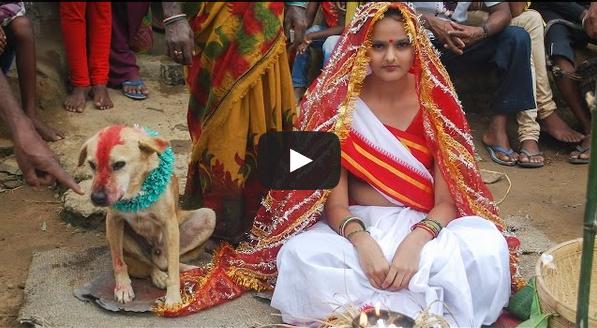الهند : رجل وزوجته يجبران ابنتهما على الزواج من كلب (فيديو)
