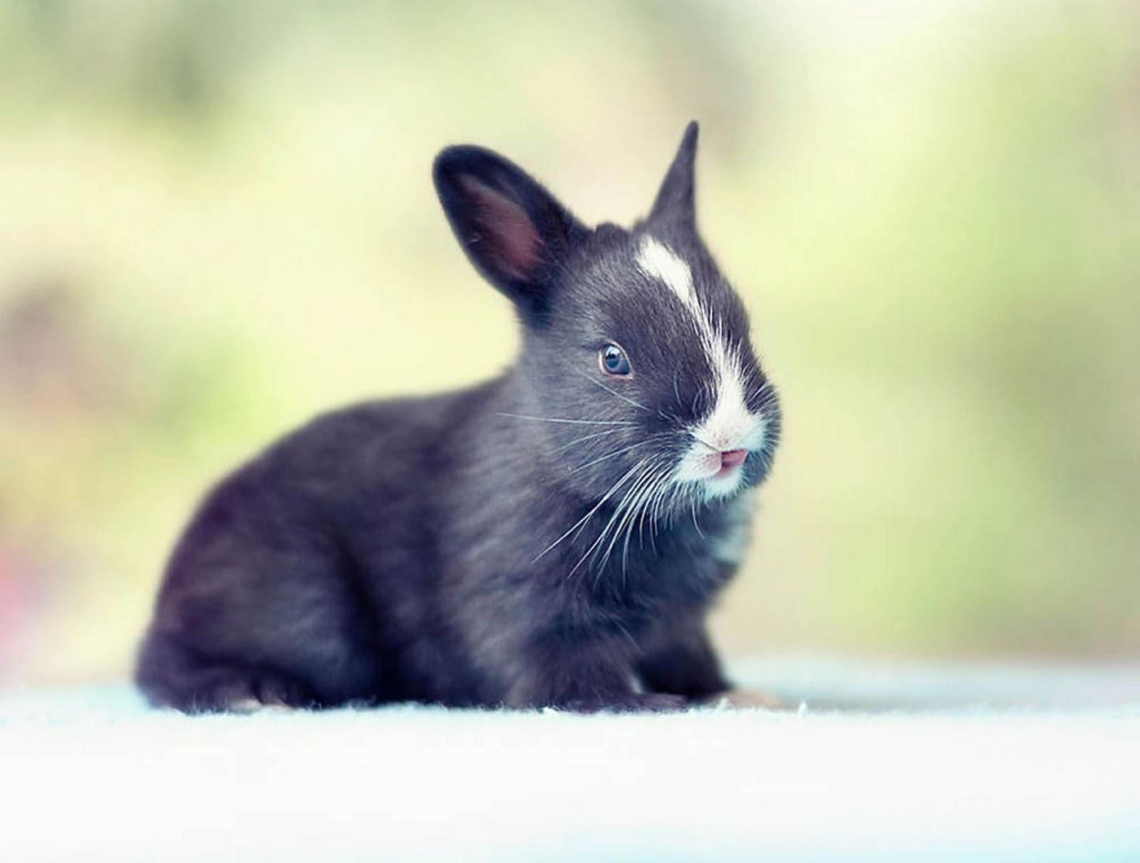 Картинки милых кроликов