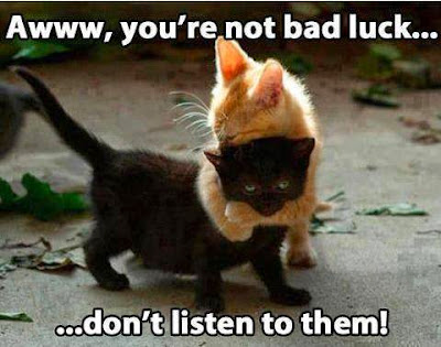 gambar kucing lucu kocak