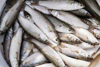 7 Makanan Mengandung Protein Tinggi