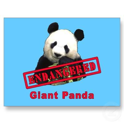 endangered species pandas  Zoo Animals