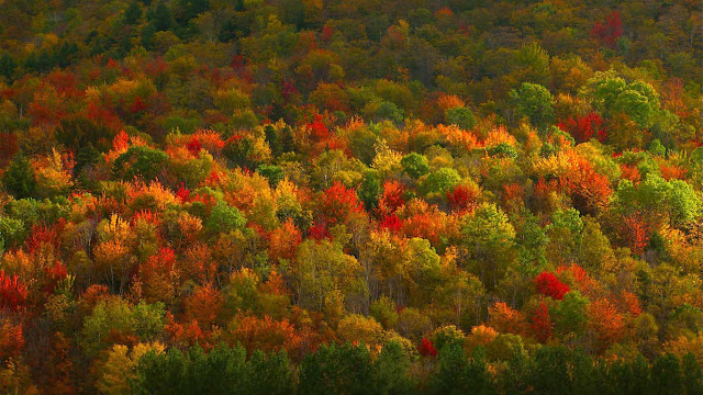 Fall foliage in Hudson Valley, New York (© Corbis)