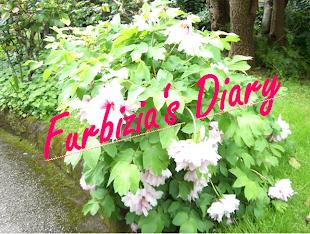 Furbizia's Diary: Link