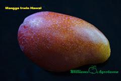 Mangga Irwin Hawai