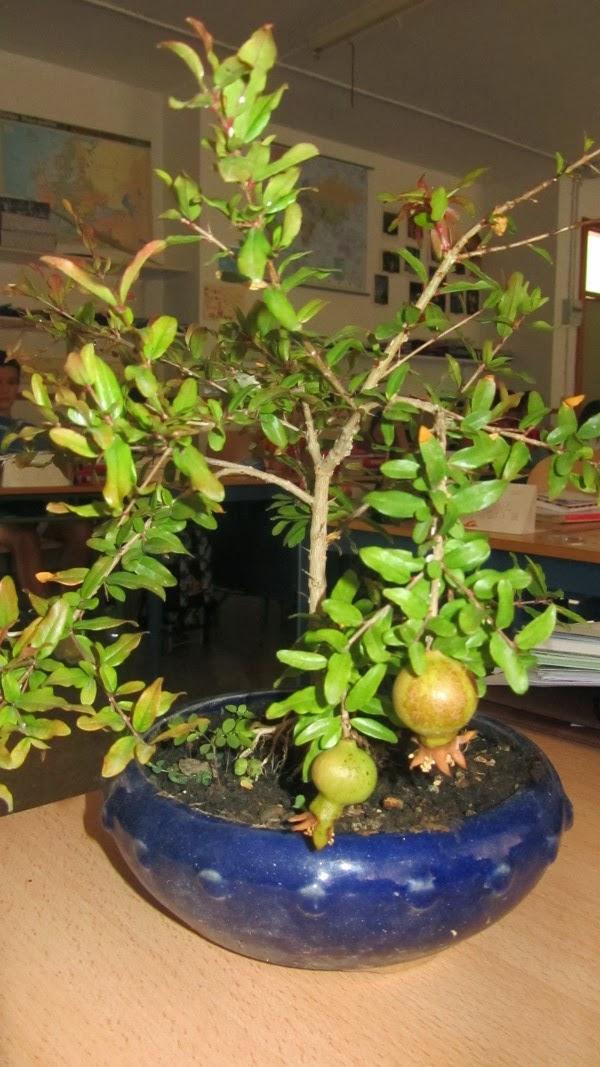 Queremos musicarte el jard n de los bonsais - Jardin de bonsais ...
