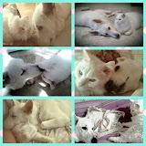 Mon chat et mon chien adorés...