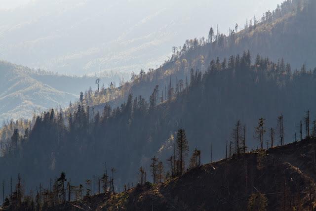 Transilvania Maramureș Ardeal Transylvania Romania Carpathians Carpați pădure defrișare despădurire deforestation logging eastern europe forest environmental destruction