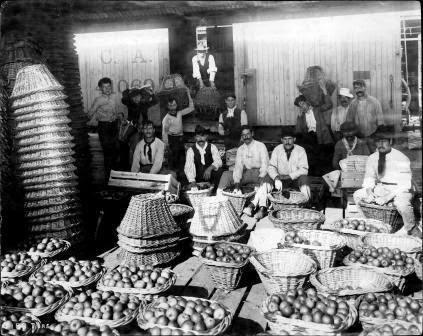 Mercado de Frutos de Tigre