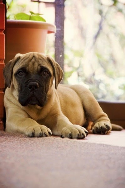 5 Dog Breeds That Are Total Gentle Giants