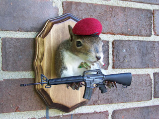 Funny Squirrels With Guns