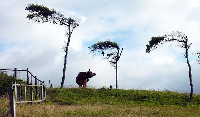 Vaca con árboles