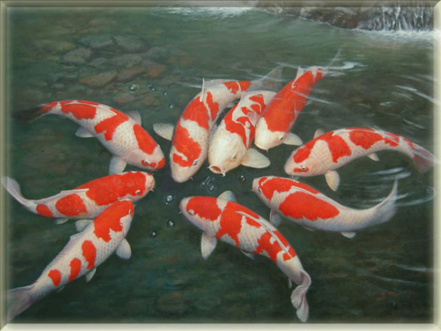 List of freshwater fish beginning with k animals name a to z for Japanese koi fish names