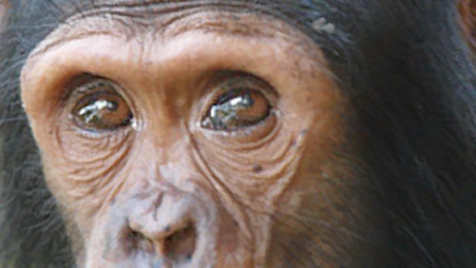 10 Spesies Hewan Paling Cerdas di Bumi