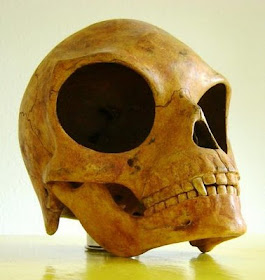 Mystery Sealand Skull, Real or Fake?