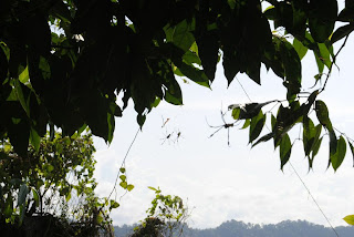 Spiders cahuita costa rica