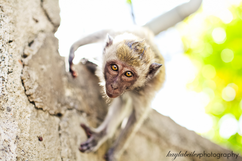 monkey in bali photo