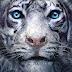 ' A Madição to Tigre ' vai ganhar adaptação no cinema