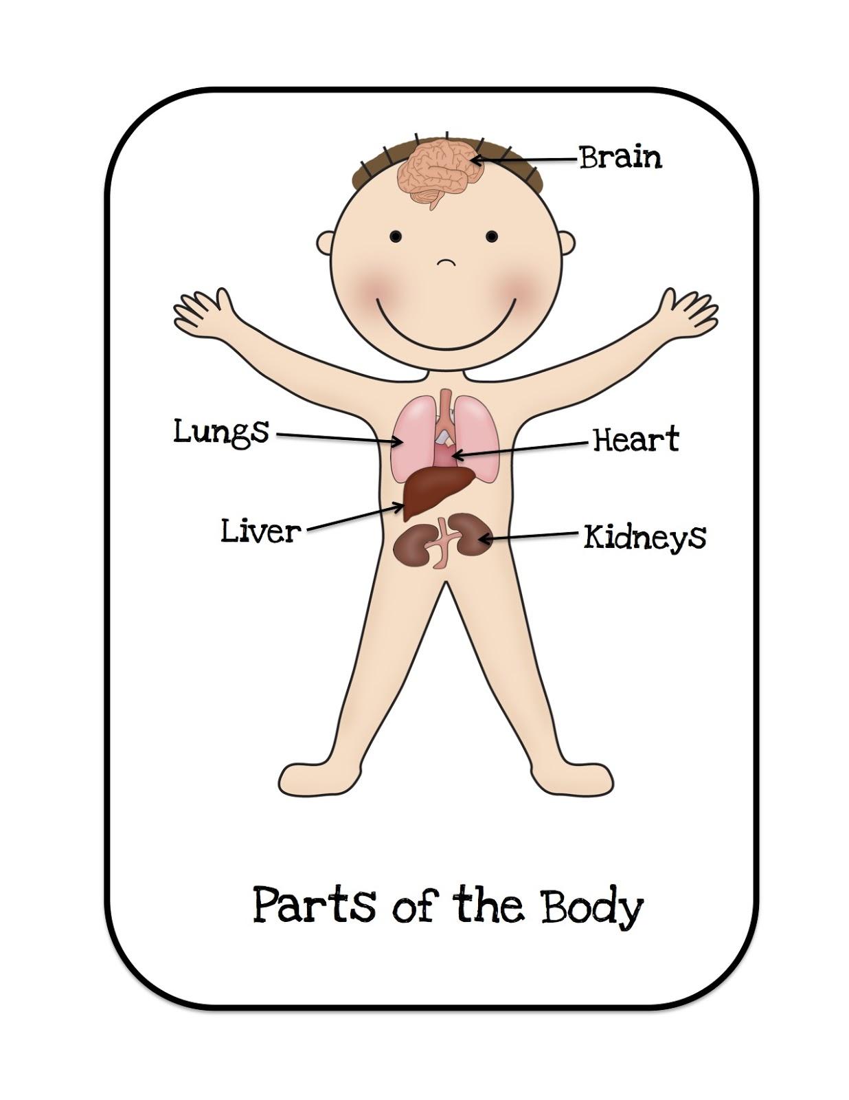 Preschool Printables Happy Organs Bulletin Board Cards