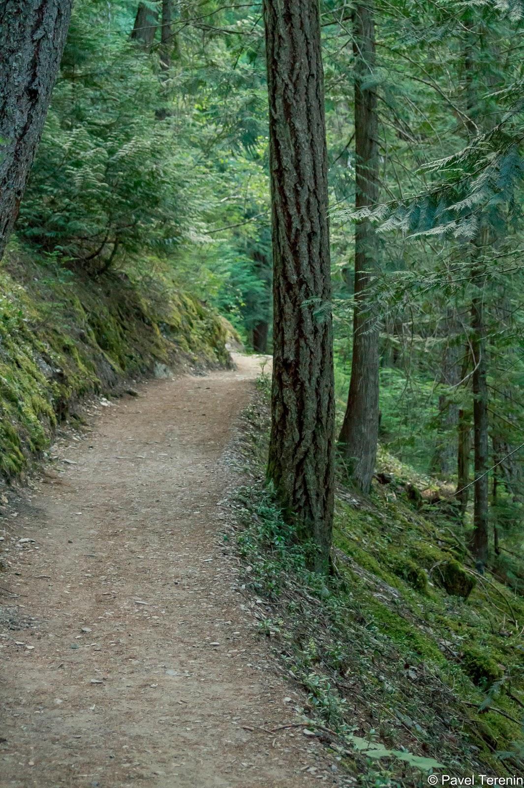 Первые семь километров трэйл вёл по лесу