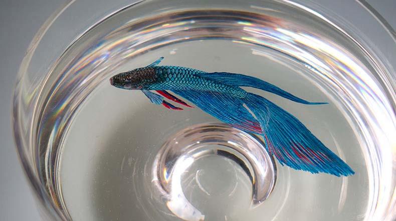 Nueva Fauna silvestre acuática pintado en capas de resina por Keng Lye