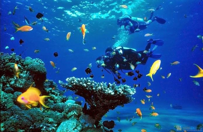 môn thể thao lặn biển