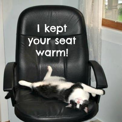 Cat lying on chair. With caption I kept your seat warm.