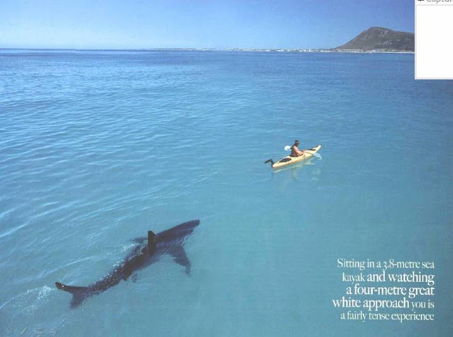 A Shark and A Man