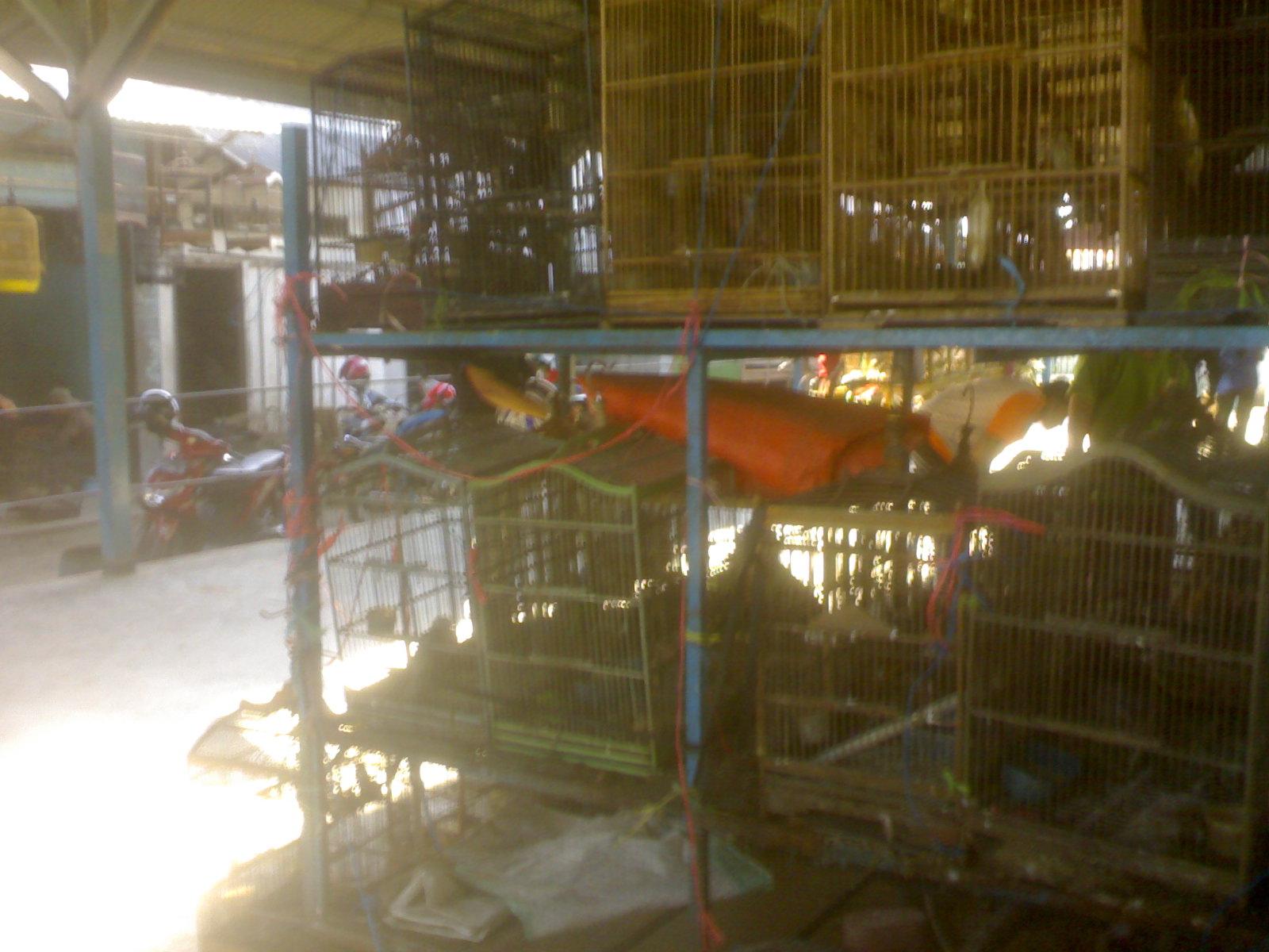 Pasar Burung Tulungagung Hooobies