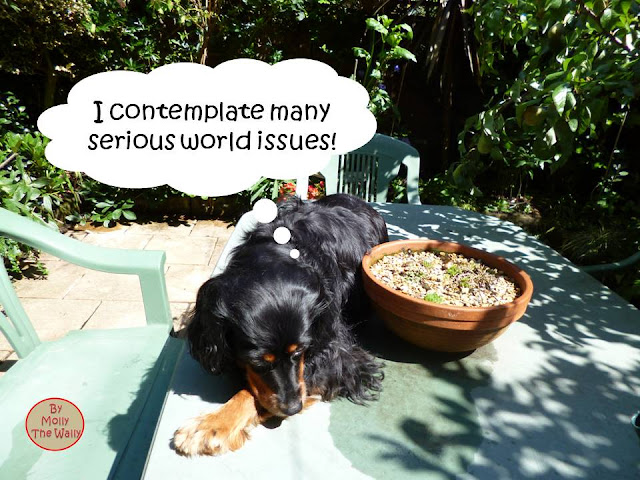 Molly The Wally In The Garden!