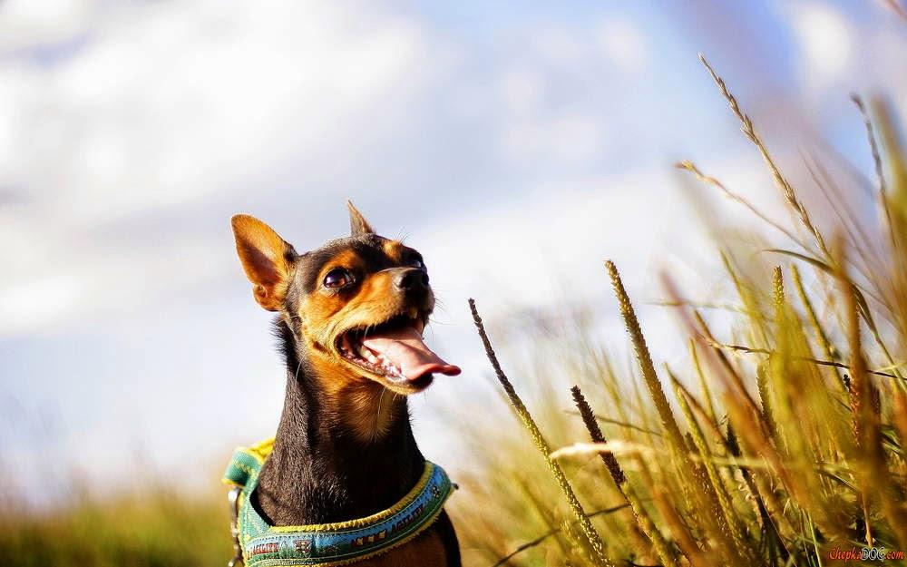 imagenes de perros lindos