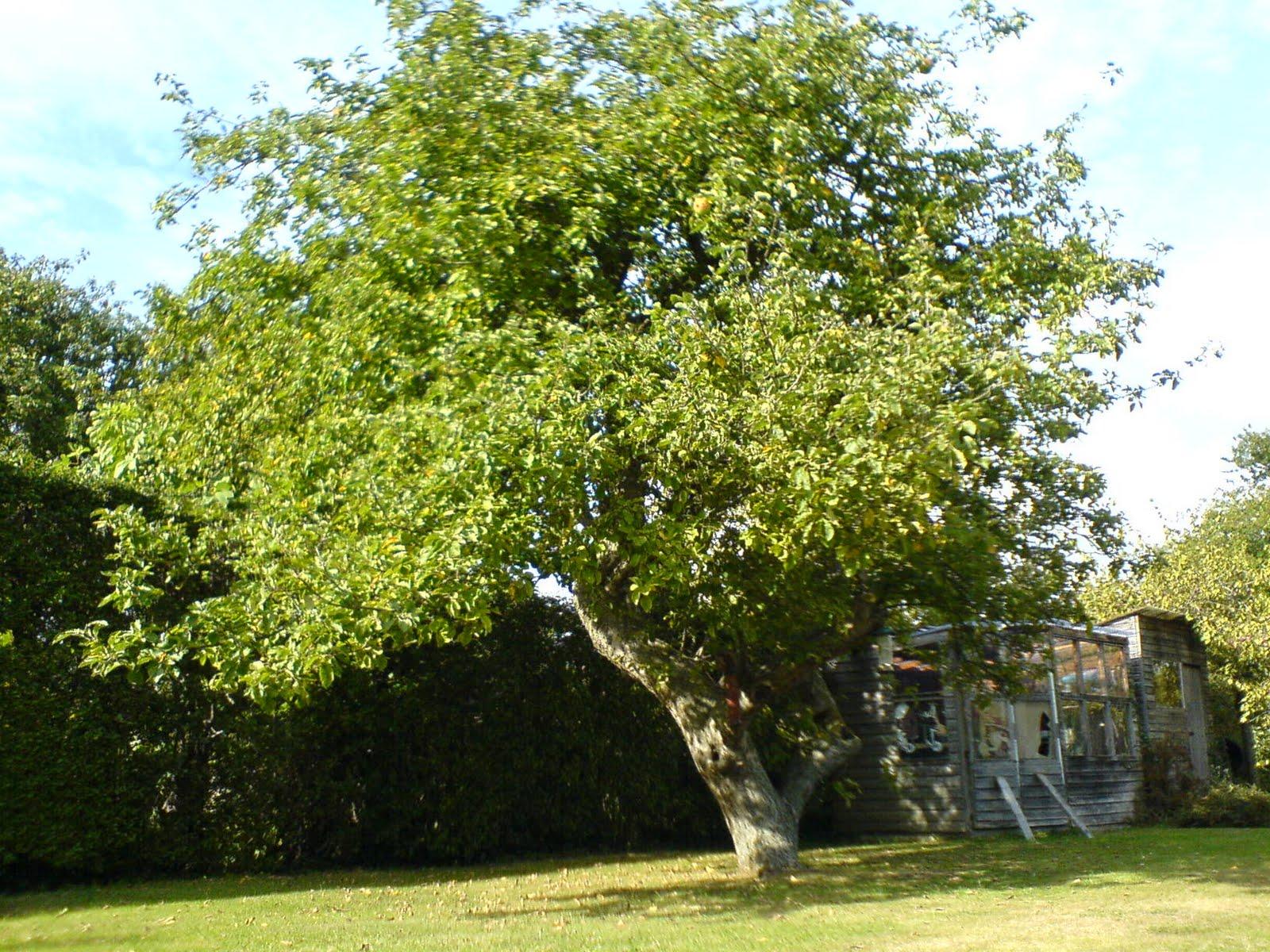Libramente racconto il melo for Foto alberi da frutto
